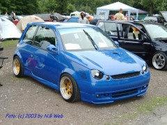 LUPO BLUE GOLD